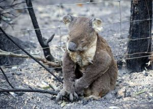Australian Day Of Mourning for the Victorian bushfire victims